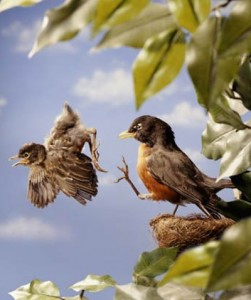 Baby-Bird-Learning-to-Fly1
